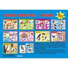 Planse didactice - Pasari