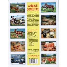 SET 10 Planse  cu animale domestice