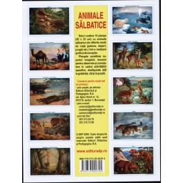 SET 10 Planse  cu animale salbatice