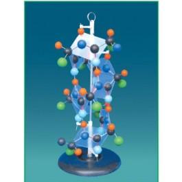Model molecula proteina-1 piesa