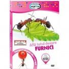Afla totul despre furnici